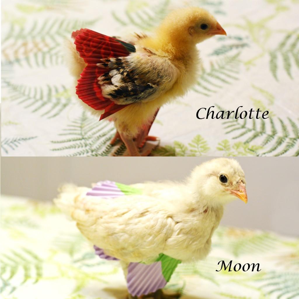 Chick_Skirts
