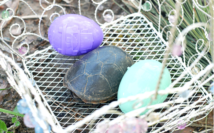 easter_turtle