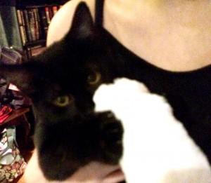 My_Cat_Paw3