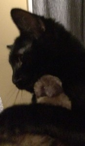 My_Cat_Paw5