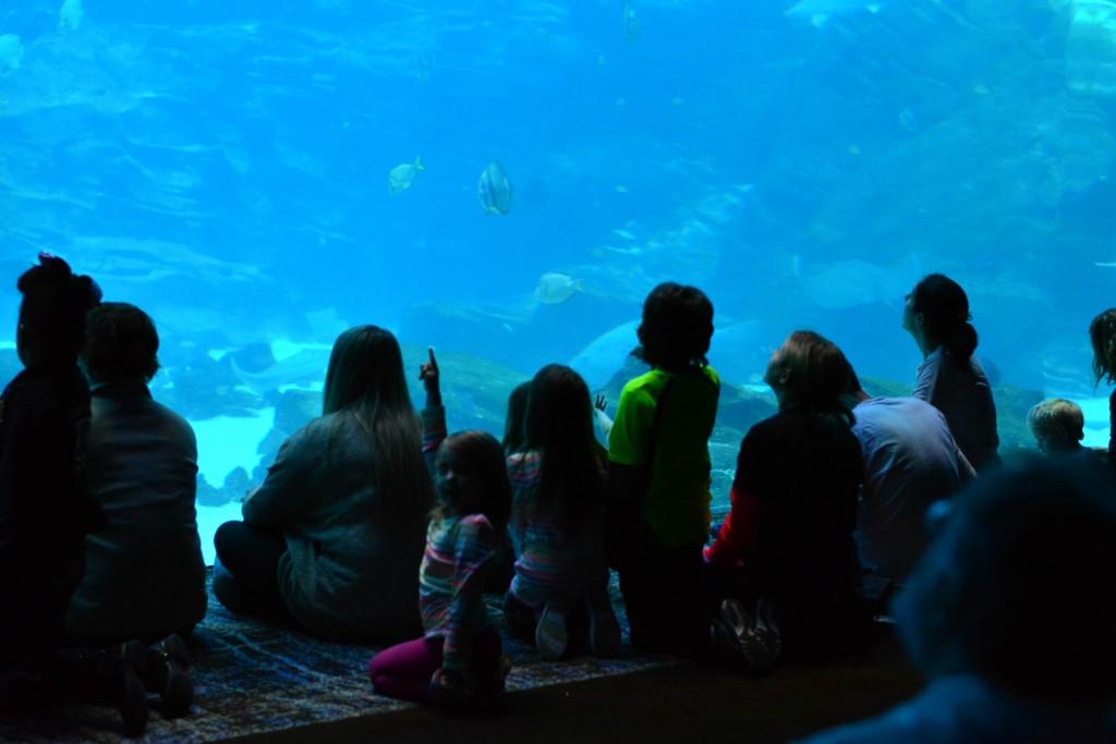 2015-02-14 15.35_Georgia_Aquarium