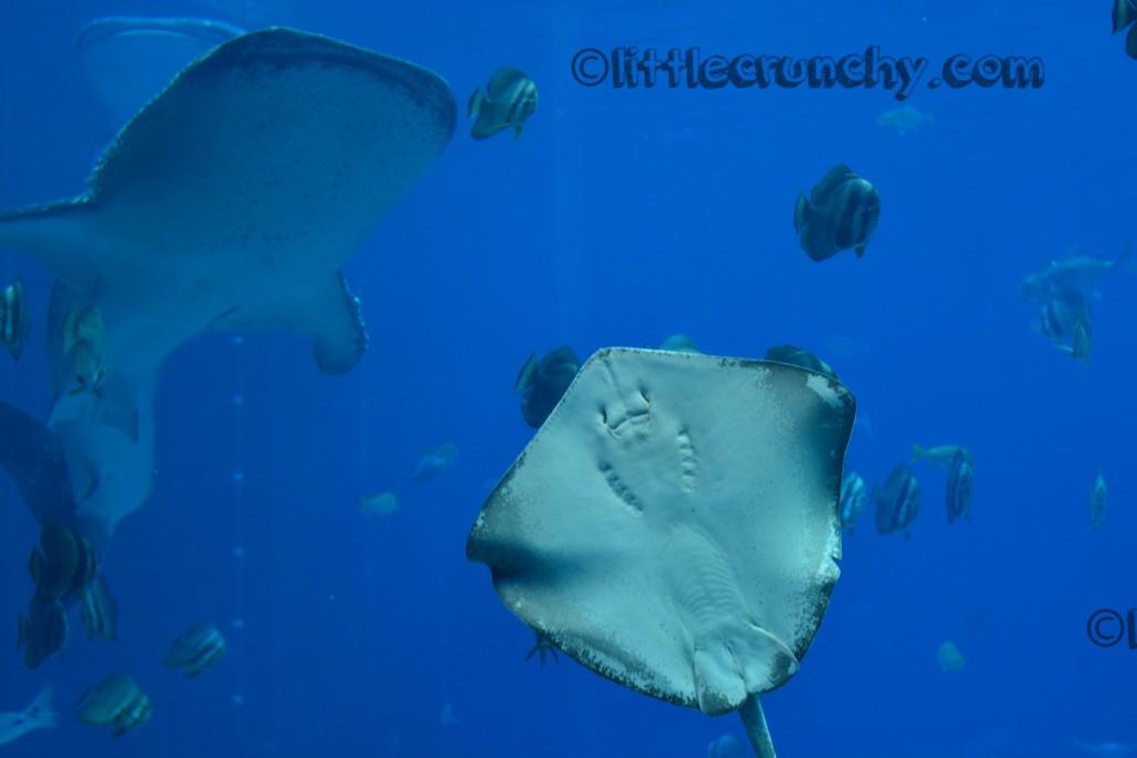 2015-02-14 15.37_Georgia_Aquarium