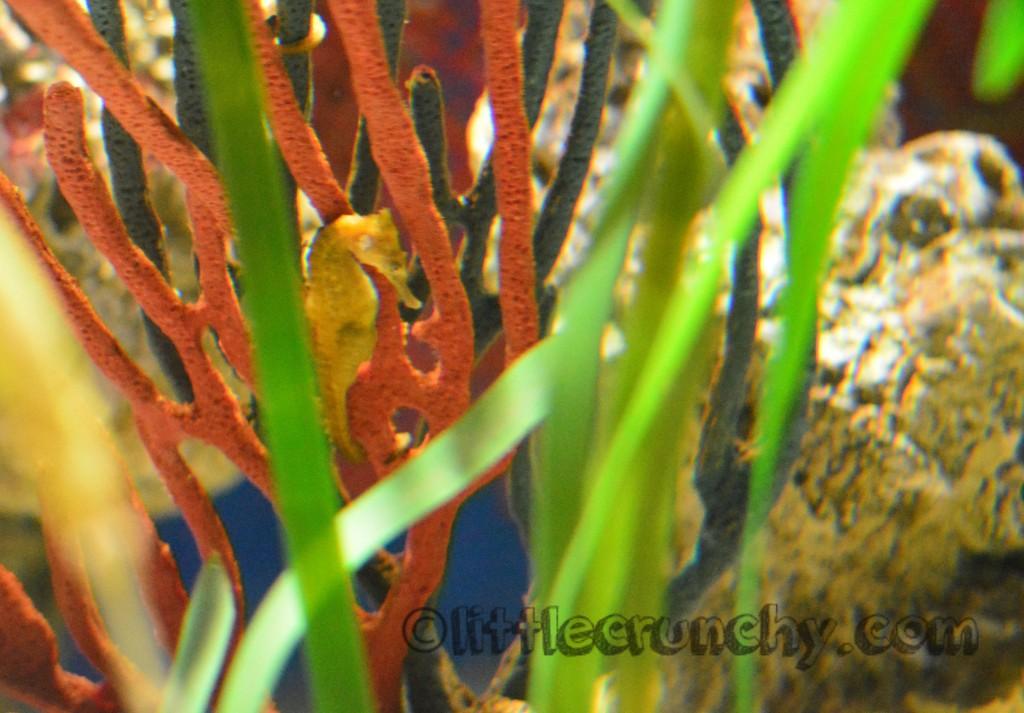 2015-02-14 17.16_Georgia_Aquarium