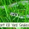grass-snake-634639_1280