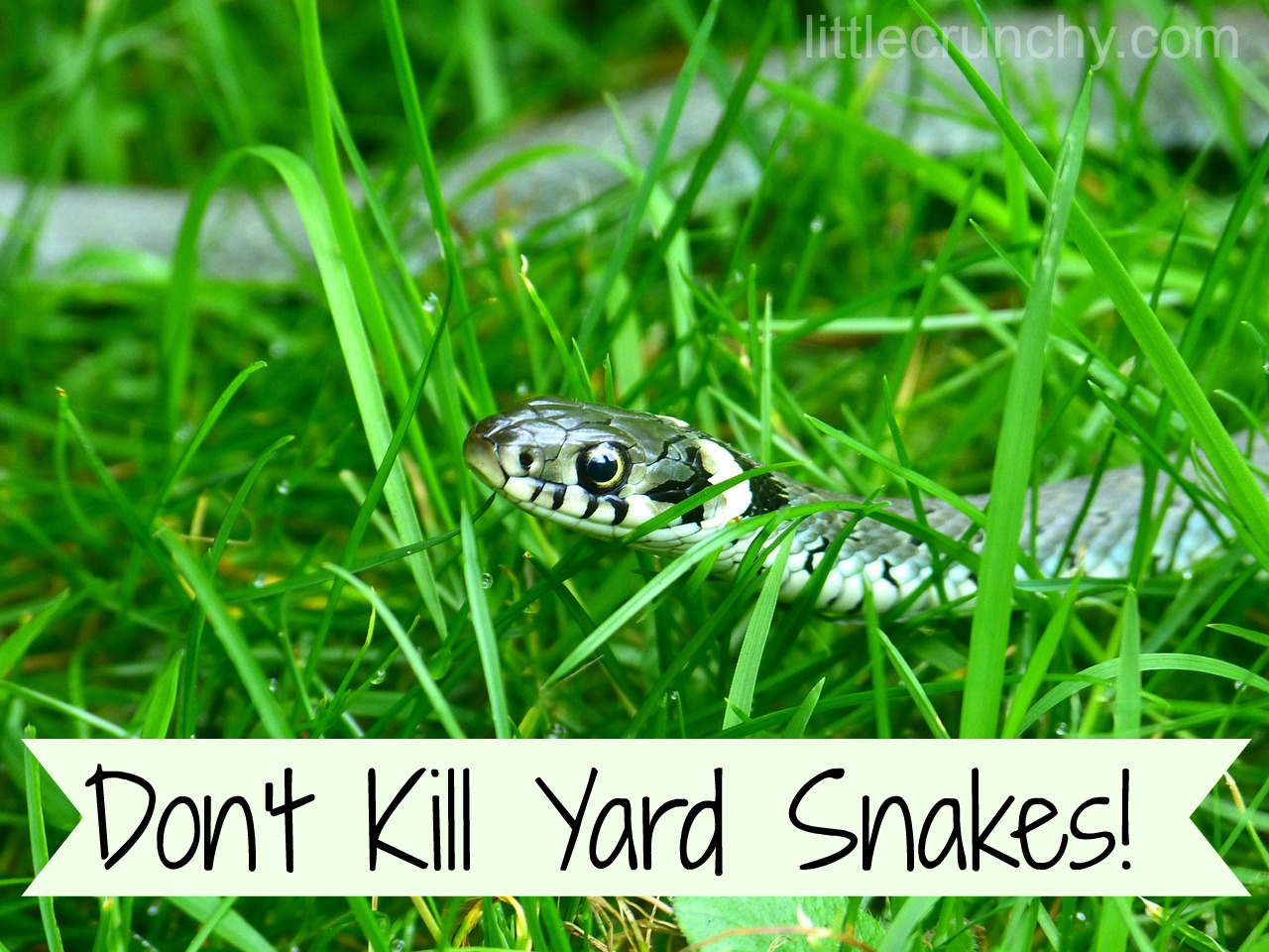 Why you should welcome a snake in your yard! - A Little ...
