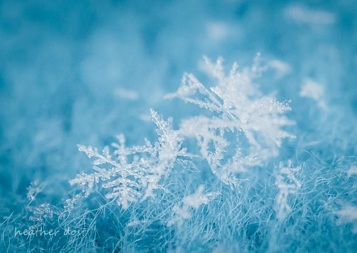 snowflake-photo