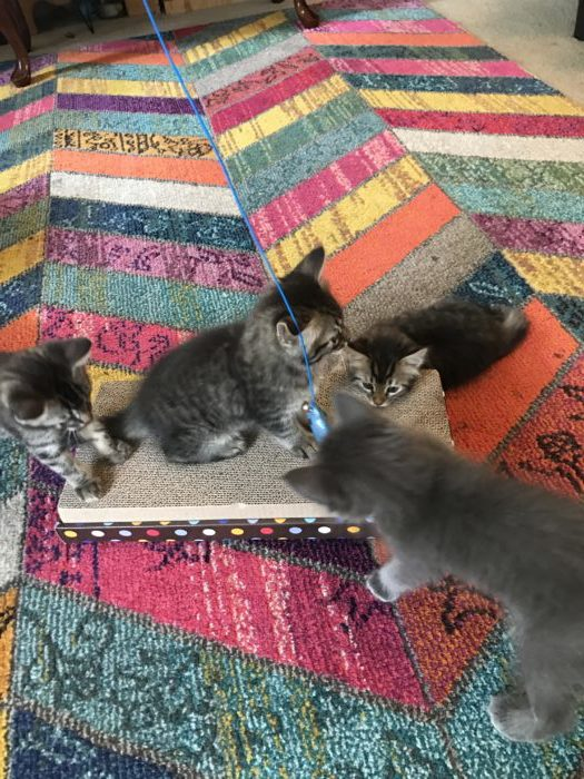 kittens need scratching board