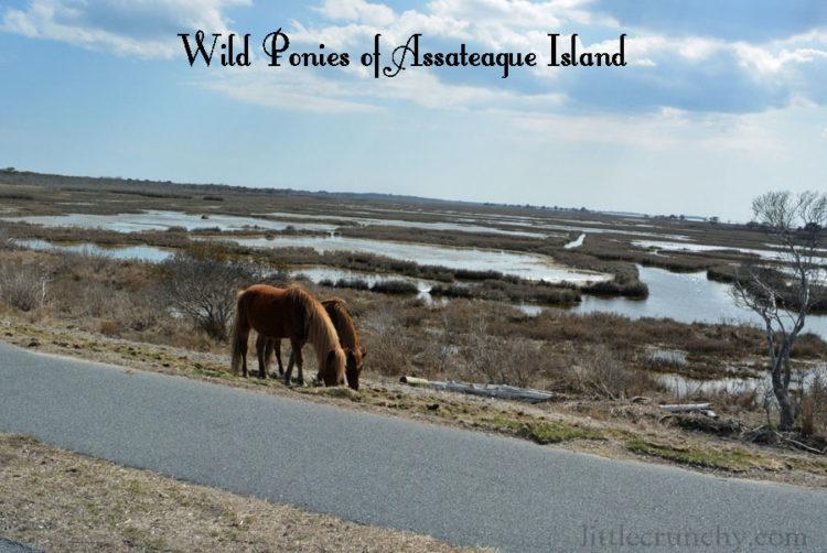 Wild_Ponies_2