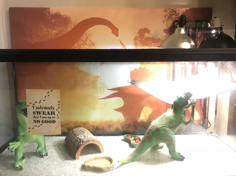 Photowall Review Canvas behind bearded dragon tank