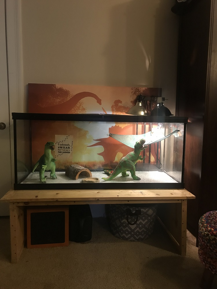 Bearded dragon tank setup