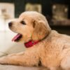 Importance of puppy training